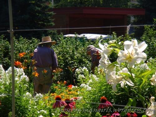 Beautifully tended Empire garden