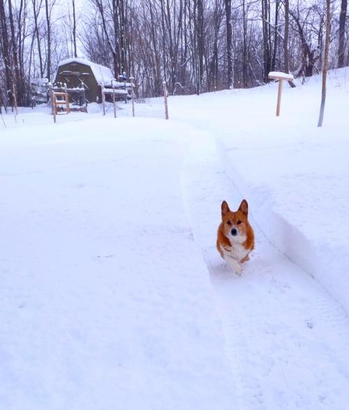 a dog path